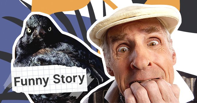 Long Story Short, a Crow Attacks My Father and Our Neighbor Feels Happy about It - Funny Story