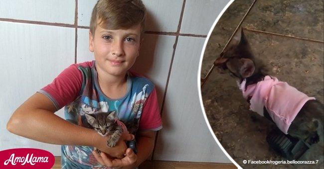 Un garçon de 9 ans a eu la bonne idée de sauver un chaton qui ne peut pas marcher avec ses jouets