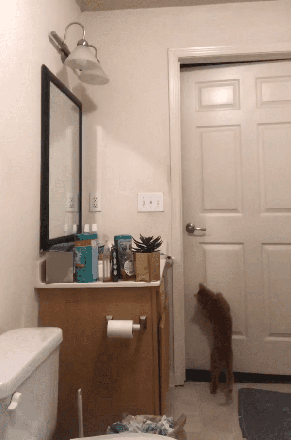 Gato intentando salir del baño. Fuente: Twitter/steeleio_