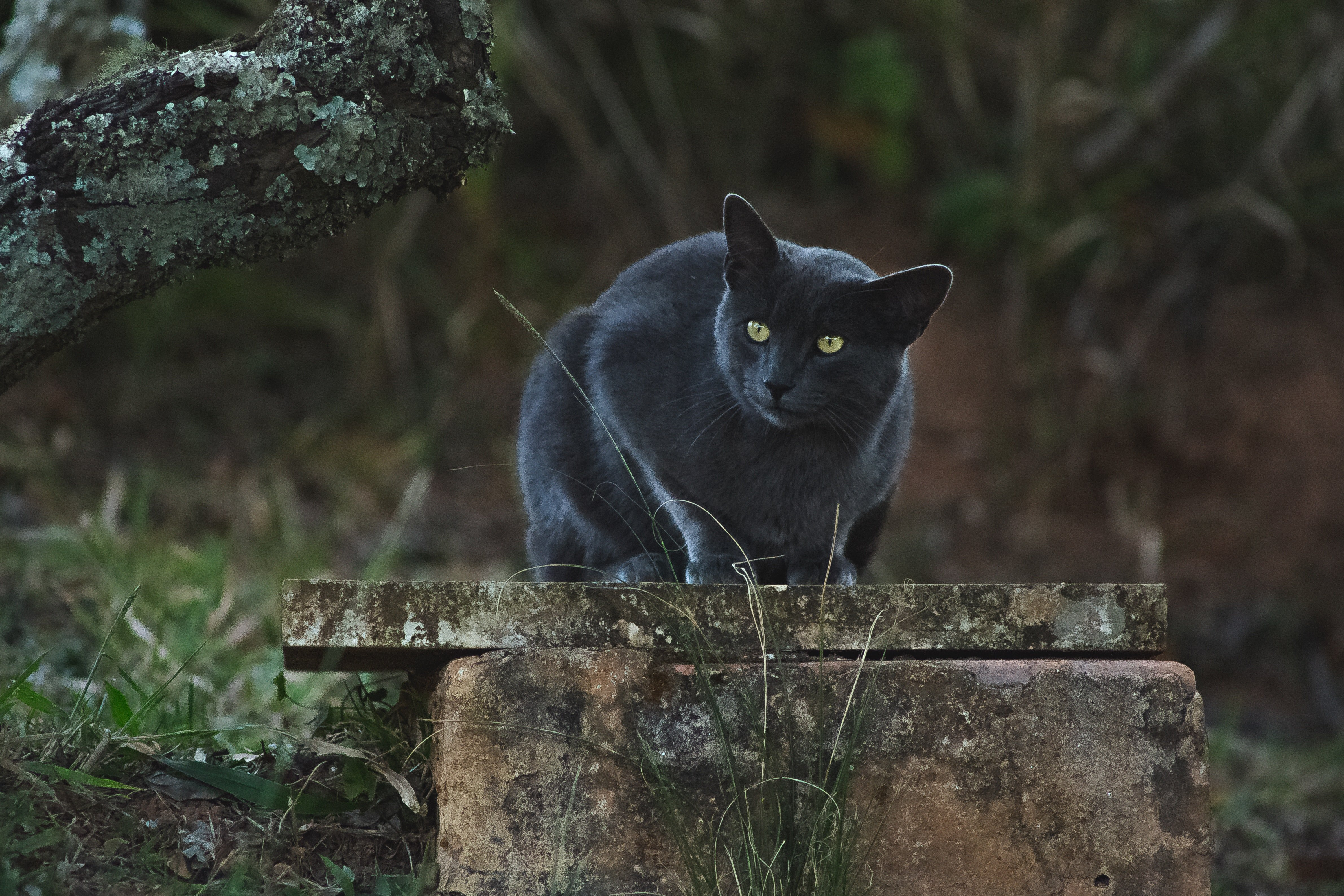 Pictured - A black cat with hazel eyes | Source: Pexels