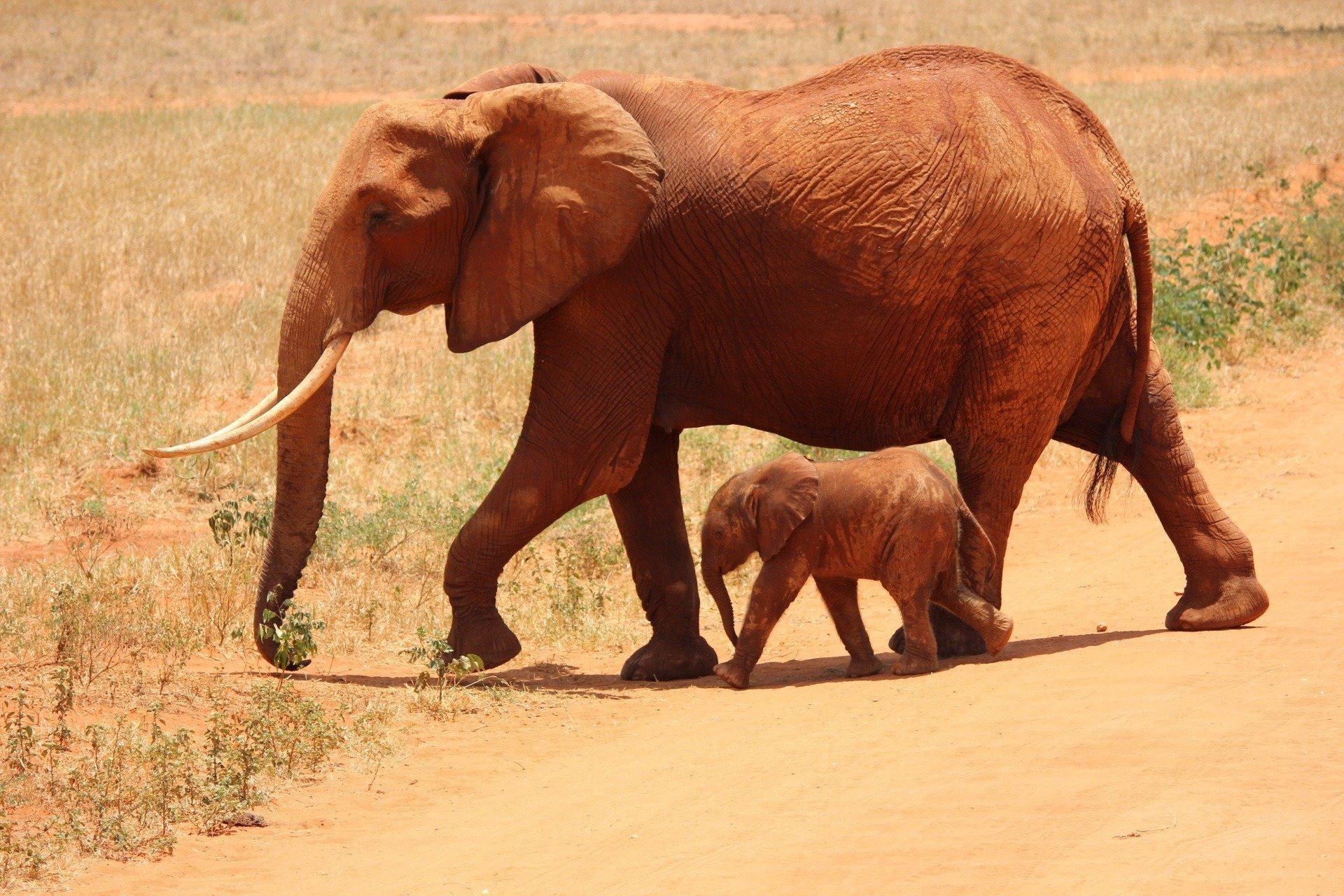 Elefante y cría. Fuente: Pixabay
