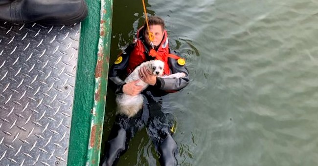 A man clings to his dog as both of them are towed and rescued from a river | Photo: Twitter/NYPDSpecialops