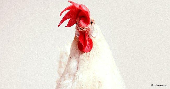 Bauer dachte, er hätte für einen Hahn zu viel bezahlt