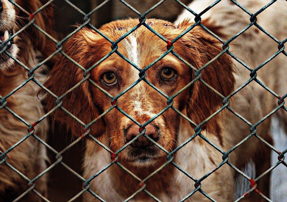 Perro encerrado / Imagen tomada de: Pixabay