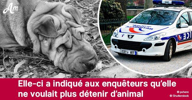 Dans le Tarn-et-Garonne, un chien est mort dans la forêt, attaché à un arbre: Le propriétaire sera jugé en juin