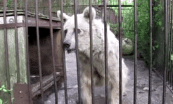 Imagen tomada de: Youtube/PETA (People for the Ethical Treatment of Animals)