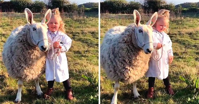 Three-Year-Old Girl Goes Viral after Taking Her Sheep for a Walk