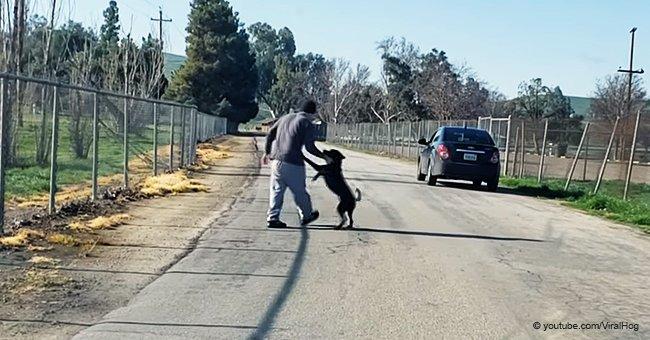 Devastador momento en que perrito no entiende porqué su dueño lo abandona a un lado del camino