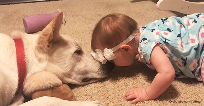 La dulce reacción de un perro cuando su dueña bebé le da un beso