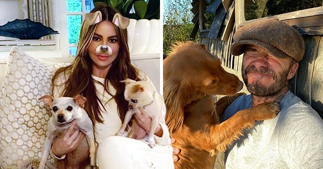 See the Sweet Posts from Sofia Vergara, David Beckham & Rumer Willis on National Dog Day