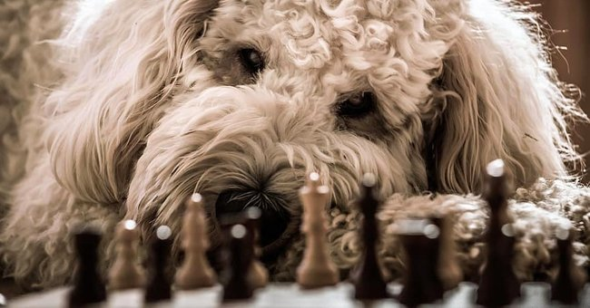 Daily Joke: A Man Was Playing Chess with His Dog