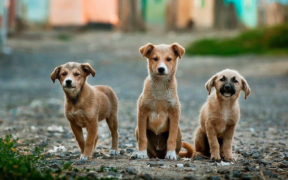 Drei Straßenhunde | Quelle: Pixabay