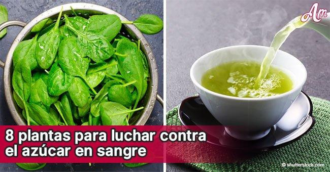 8 bebidas a base de plantas que pueden ayudarte a controlar el azúcar en sangre