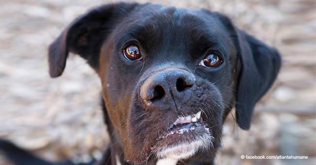 """""""Le chien le plus incroyable"""" du refuge n'a pas pu trouver un nouveau maître à cause de sa mâchoire tordue"""