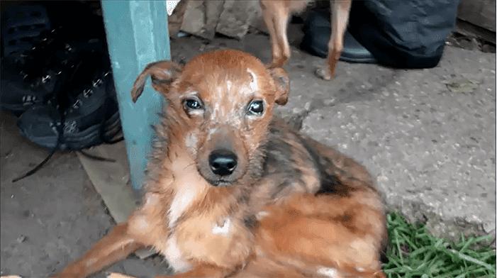 Photo de l'un des 11 chiens qui ne parait pas dans une bonne forme. | Facebook/Tautmilės Prieglaudėlė