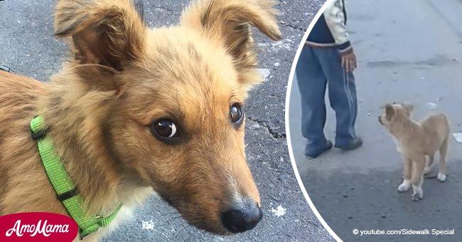Conoce al perro callejero que perseguía a gente buscando un hogar