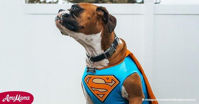 5 increíbles historias de mascotas heroicas que salvaron la vida de sus dueños