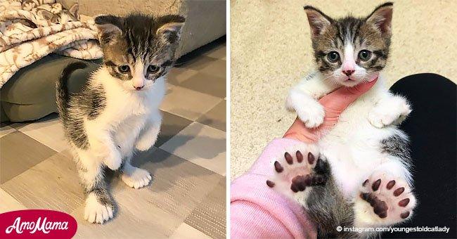 La gigante pata trasera obliga al gatito a pararse como un humano y derrite corazones en internet