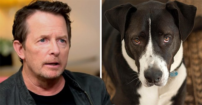 Michael J Fox Announces the Death of His Dog Gus along with a Touching Tribute