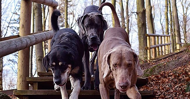 Man Who Is Ready to Stop Living with His Wife & Three Kids Just to Keep His Dogs Sparks Debate