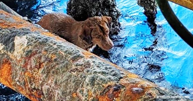 Perro es rescatado tras ser hallado a 220 km de la costa más cercana