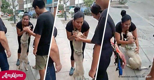 Ein Hund, der zu Weihnachten vermisst wurde, umarmt seine Besitzer nach dem Treffen