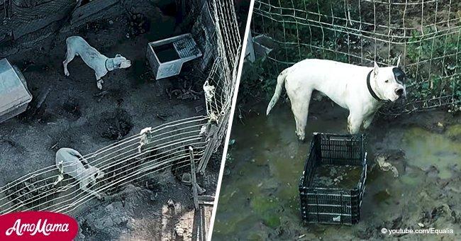"""Horror: En este """"campo de exterminio"""" perros sufren inimaginablemente y necesitan ayuda urgente"""