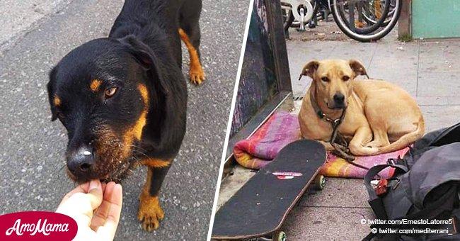 El público demanda justicia para dos perros asesinados por la policía