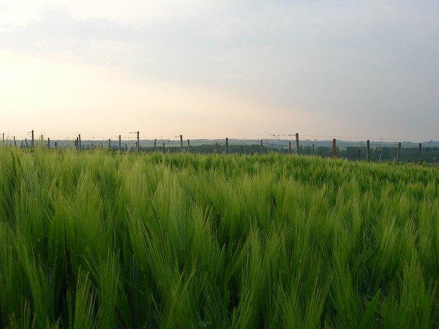 Un champ magnifique. l Source: Flickr