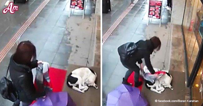 Rührender Moment als eine Frau einen nassen, frierenden Straßenhund mit ihrem Schal bedeckt