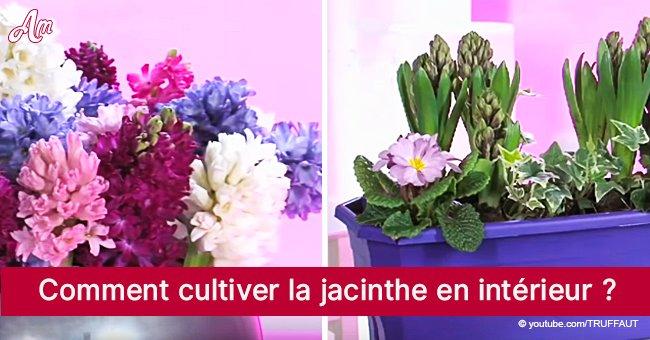La jacinthe, la fleur qui fait plaisir au nez et aux yeux