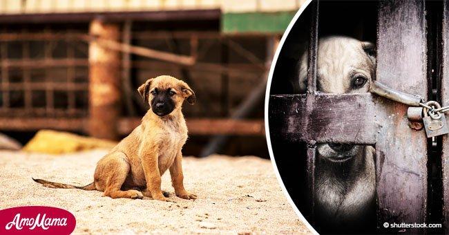 Aprueban indignante nueva ley para matar a perritos callejeros en Puerto Deseado