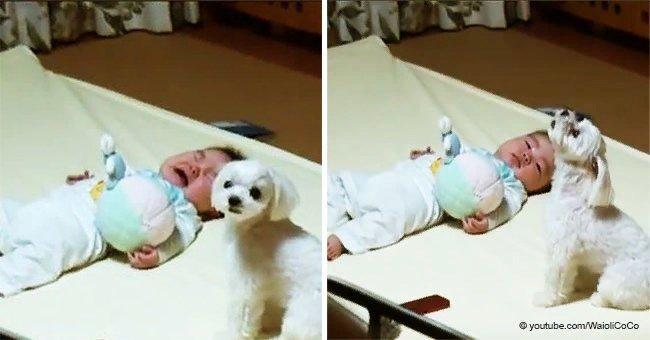 Cette maman n'arrivait pas à faire cesser les pleurs du bébé, mais le chien avait sa propre technique spéciale