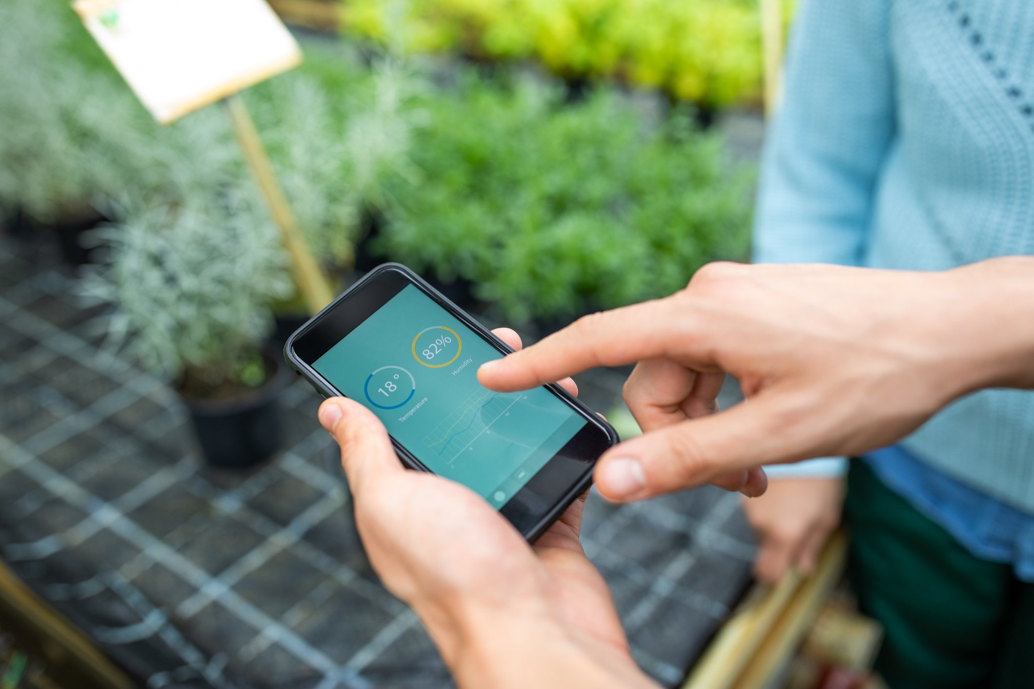 Close-up of gardener hands holding a smartphone with infographics on the plantation and irrigation. Garden workers keeping a check on plants using a mobile app at greenhouse. | Photo: Getty Images