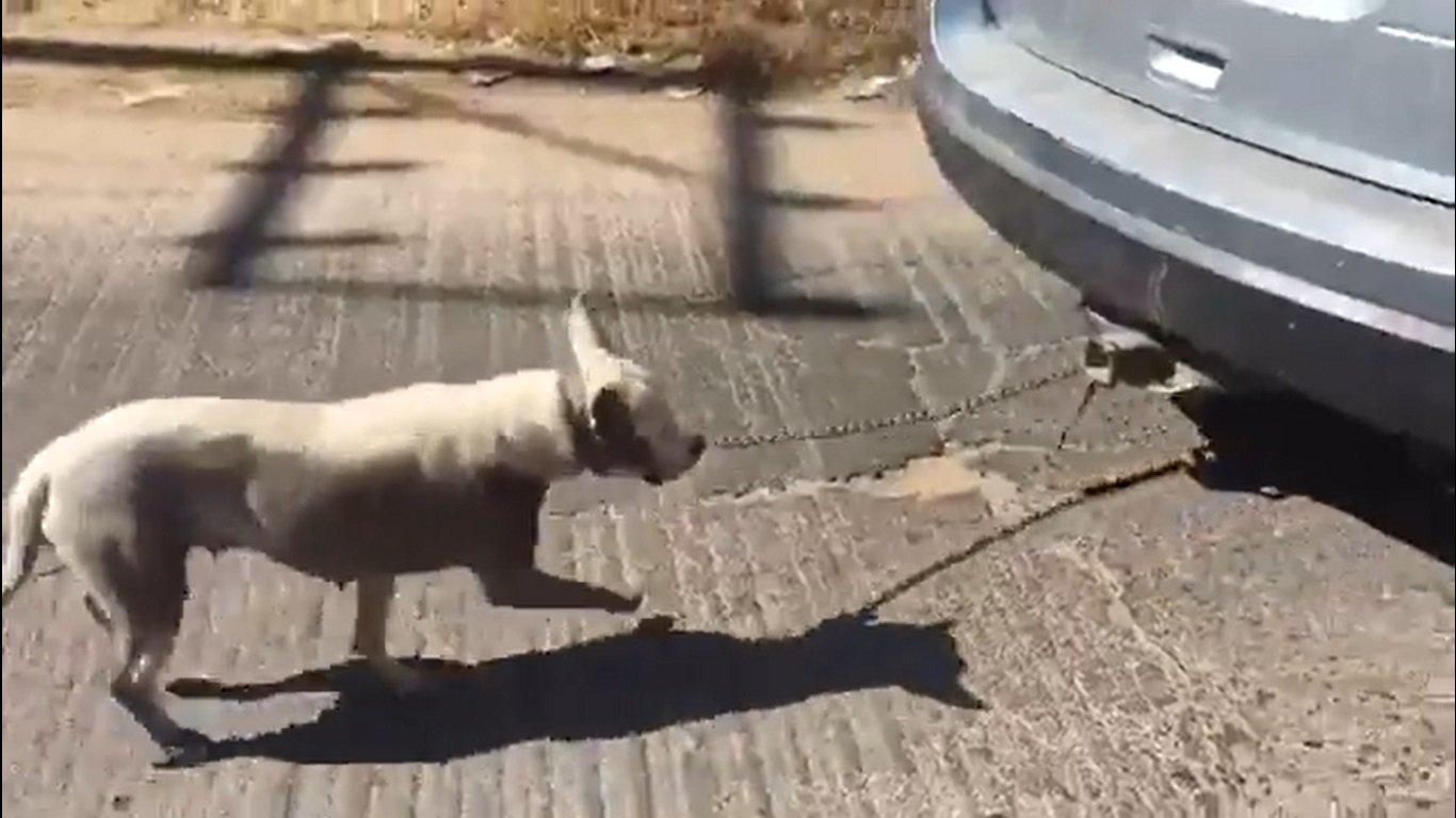 Perro siendo arrastrado por el vehículo.| Imagen tomada de: Órale! Qué Chiquito.