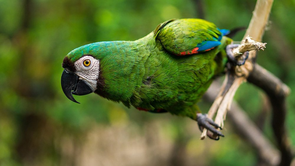 A green parrot standing on a tree branch in nature. I Image: Pixabay.