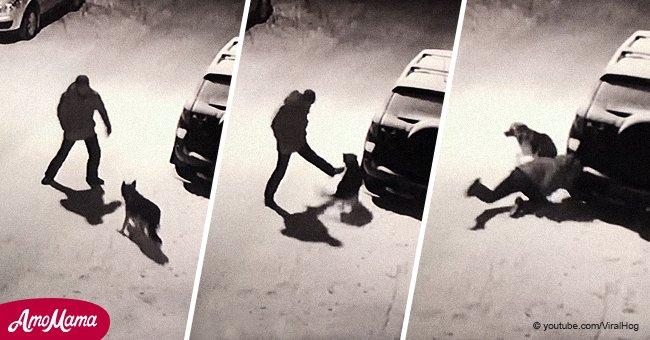 Ein betrunkener Mann versucht, einen Hund zu treten, aber er wird dafür sofort bestrafft