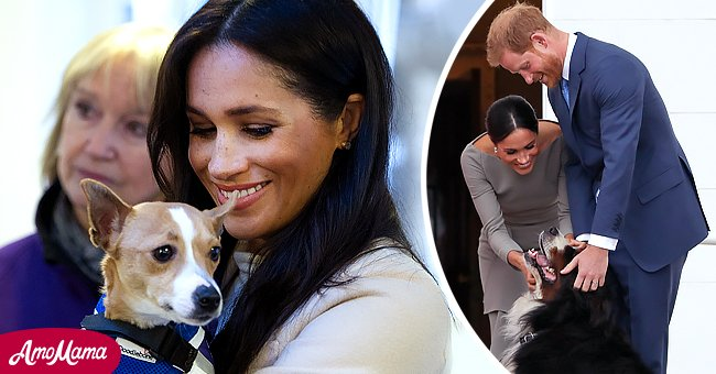 On the left: Meghan, the Duchess of Sussex meets a Jack Russell during her visit to an animal welfare charity on January 16, 2019 in London, England. On the right: The Duke and Duchess of Sussex greet the dogs of Ireland's President on arrival at the Presidential mansion on the second day of their visit in Dublin on July 11, 2018.