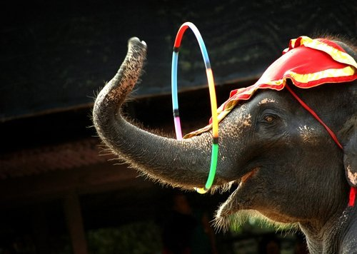Elephant performing his act. | Source: Shutterstock.