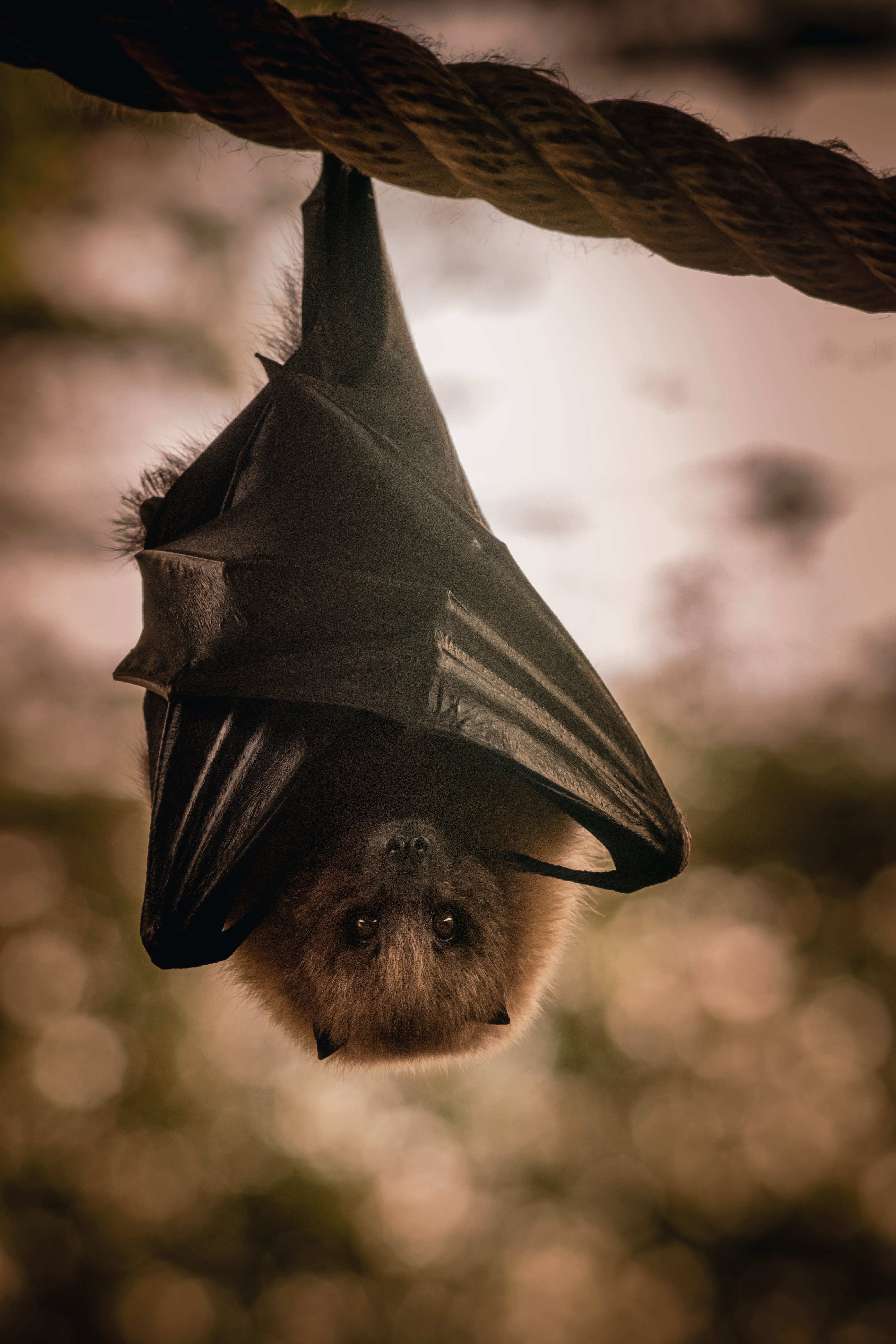 A bat in the woods hanging upside down | Photo: pexels