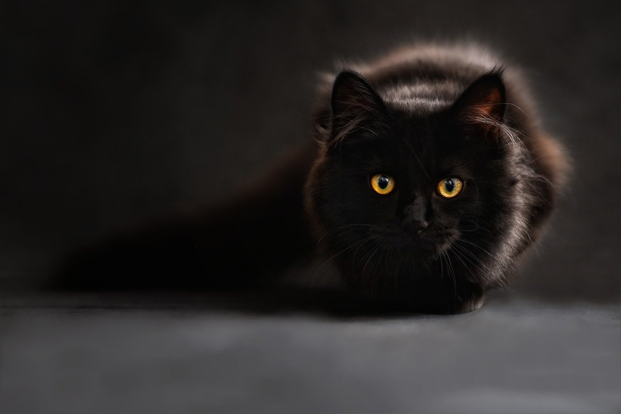 A black cat sitting and staring | Photo: Pixabay/ClaudiaWollesen