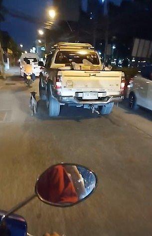 Perro junto a la camioneta de sus dueños.| Imagen tomada de: YouTube/Viral Press