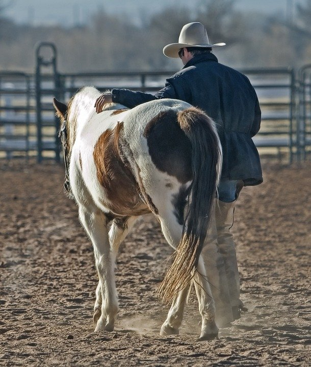 A photo of a cowboy with his horse.   Photo: Pixabay