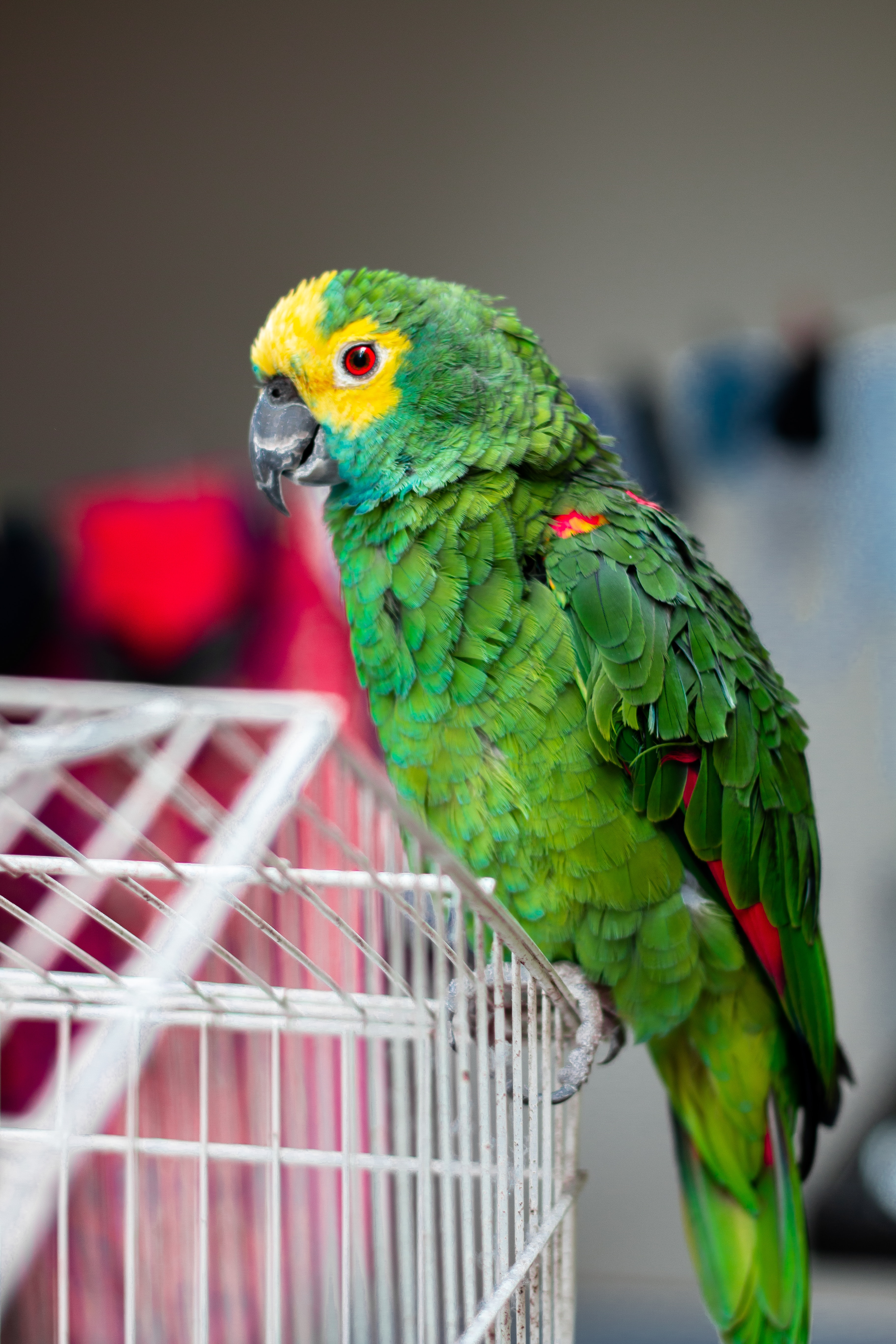 Green parrot sitting on a cage. | Source: Pexels