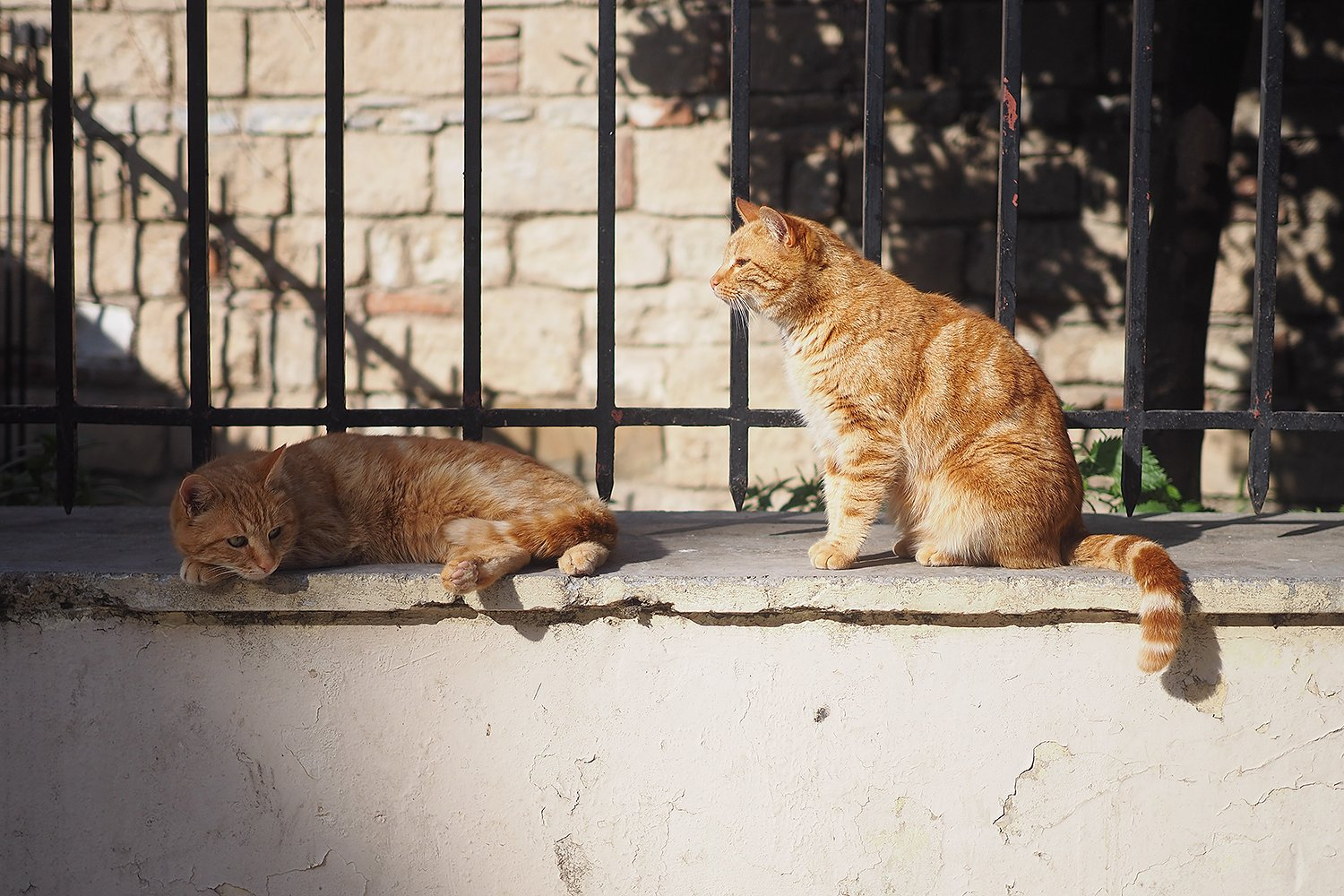 Image of two cats on a ledge   Photo: Getty Images