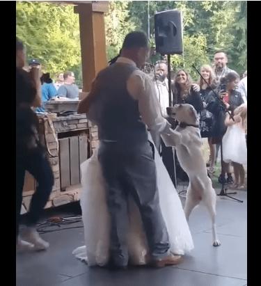 Eva se para sobre sus dos patas y baila con sus papás humanos. |Imagen: Youtube/Storyful