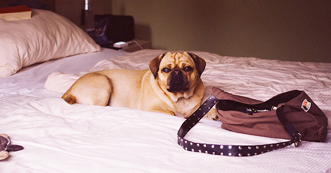 Man Asks a Hotel if He Could Bring His Dog