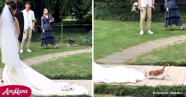 Wedding party approaches the altar when an unexpected guest jumps on the bride's dress