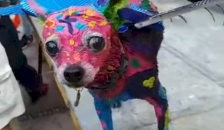 Valentino was painted to recreate a Mexican alebrije. | Source: Facebook/Reporteros Hoy