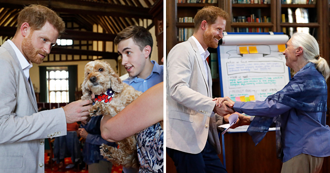 Prince Harry Spotted Petting a Dog during an Event with Conservationist Dr Jane Goodall